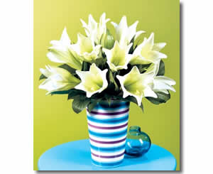 Easter Flowers - Easter Lillies